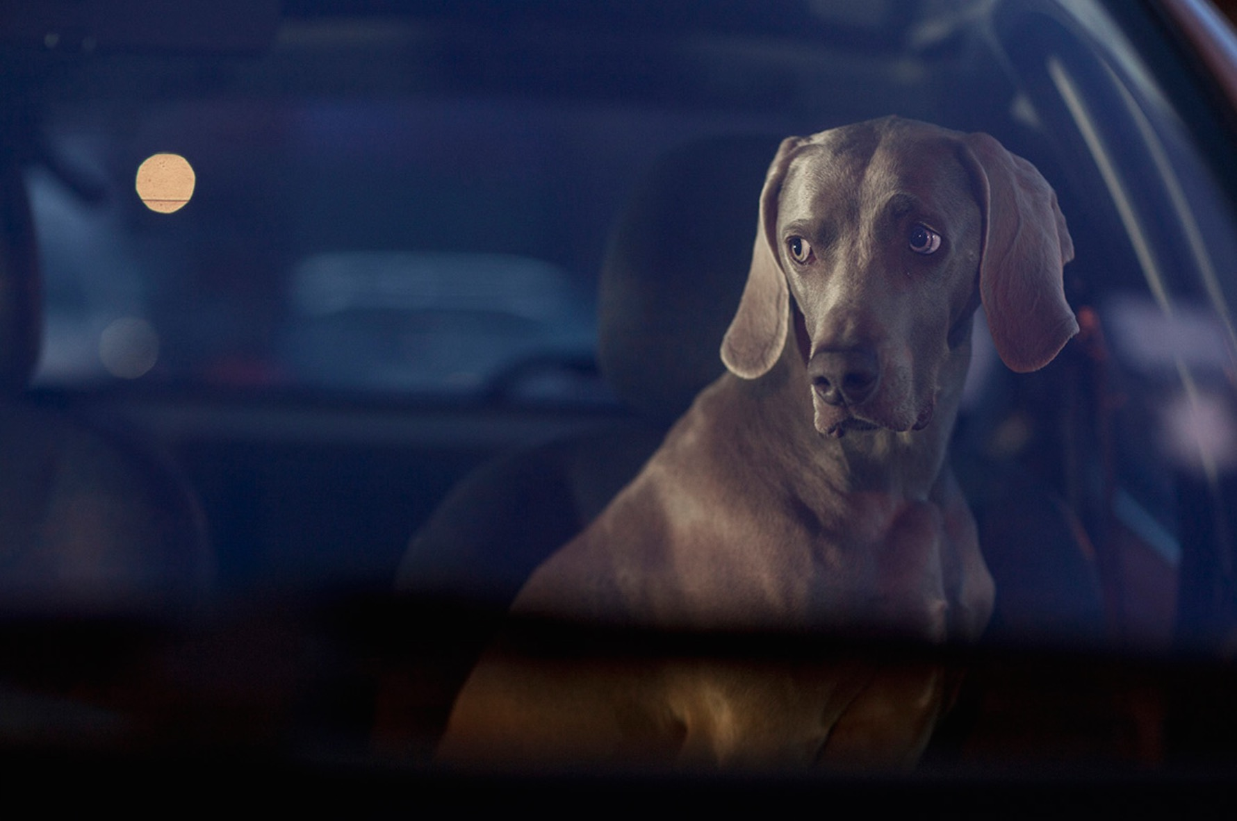 Martin-Usborne-photographe-chiens-voitures-11