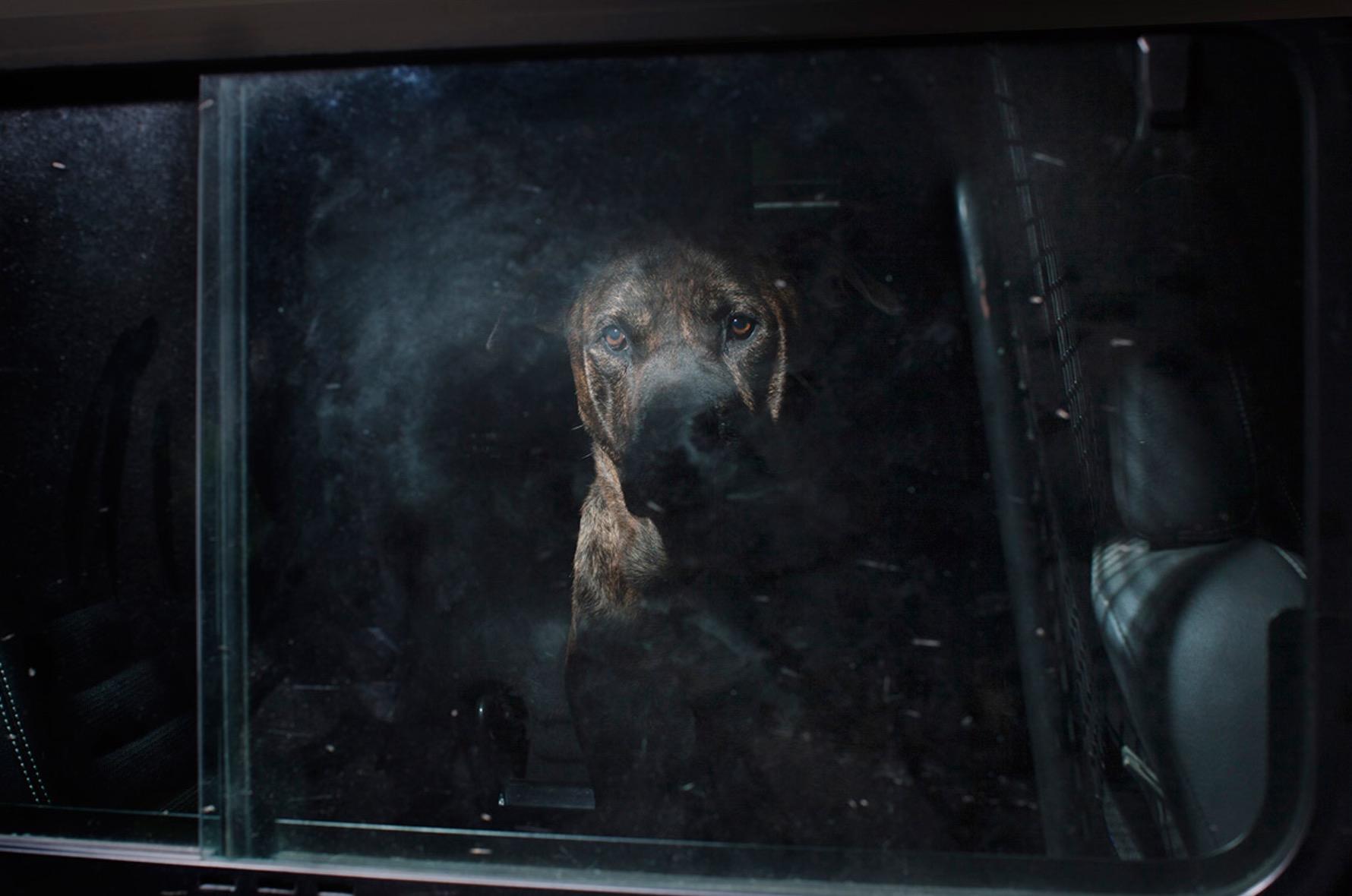 Martin-Usborne-photographe-chiens-voitures-13