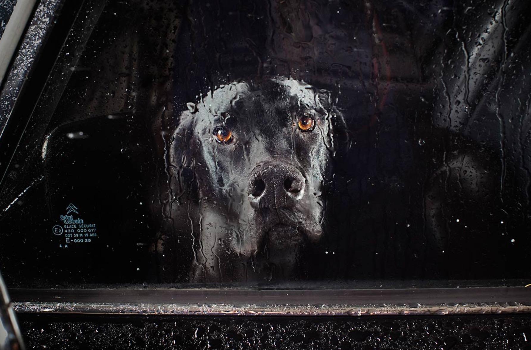 Martin-Usborne-photographe-chiens-voitures-14