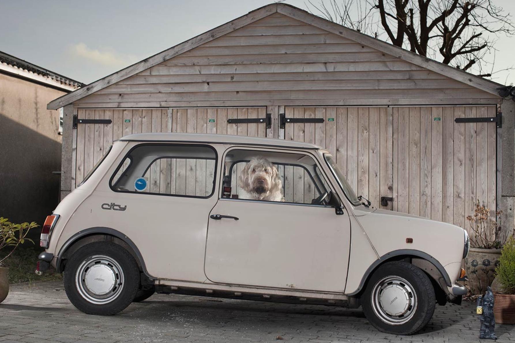 Martin-Usborne-photographe-chiens-voitures-15