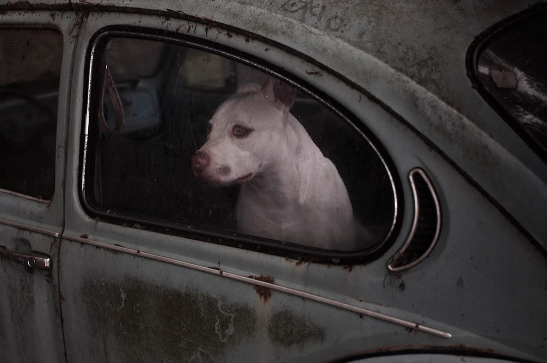 Martin-Usborne-photographe-chiens-voitures-16