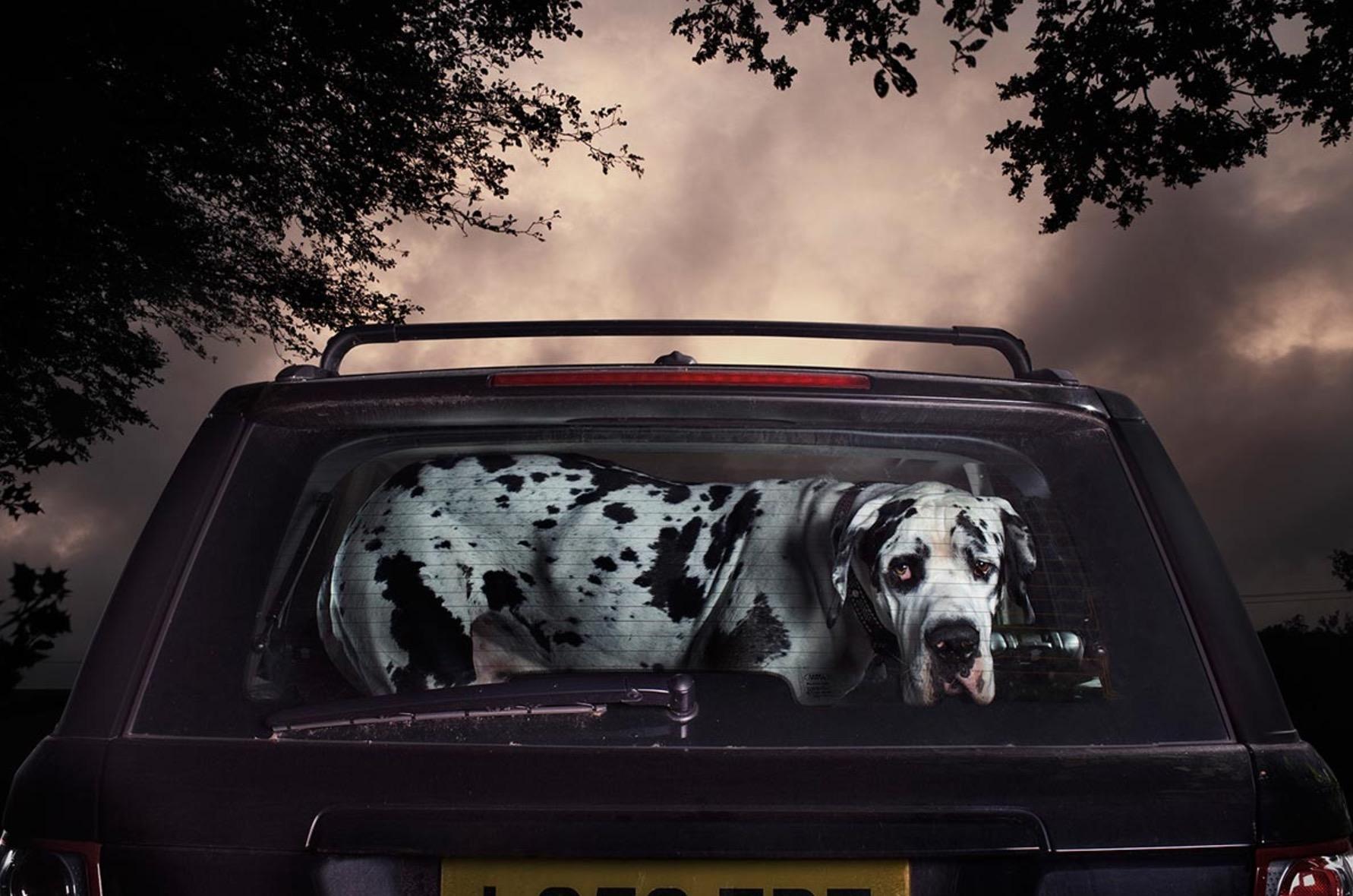 Martin-Usborne-photographe-chiens-voitures-2