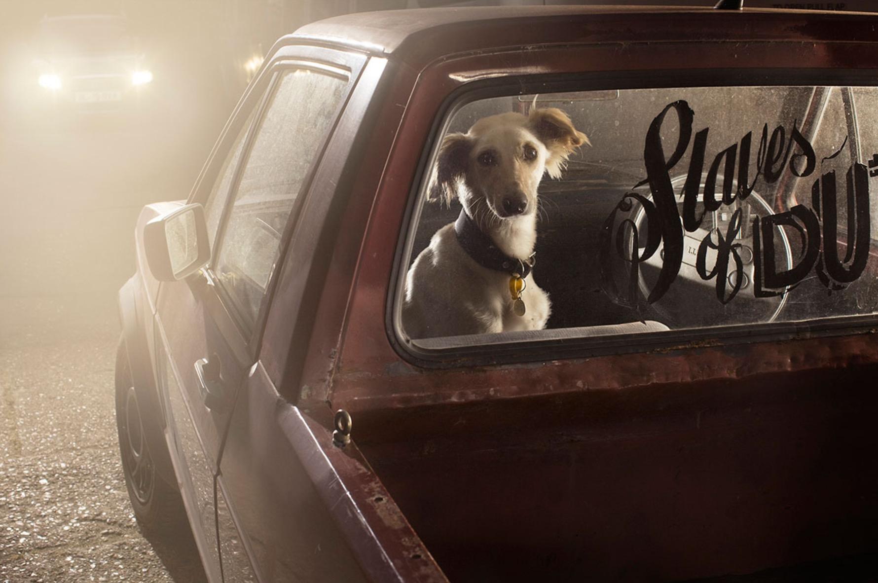Martin-Usborne-photographe-chiens-voitures-3