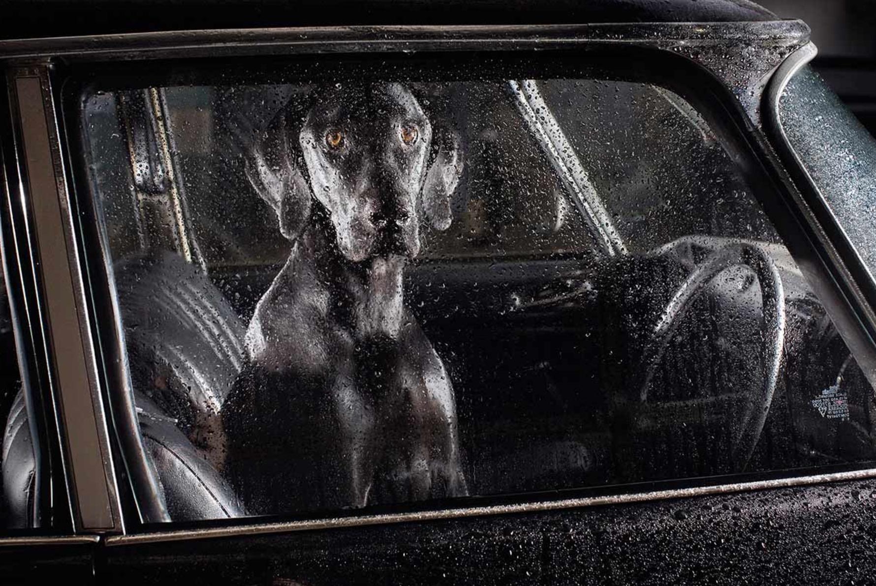 Martin-Usborne-photographe-chiens-voitures-4
