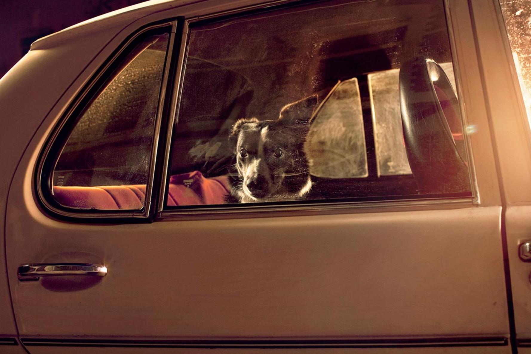 Martin-Usborne-photographe-chiens-voitures-5