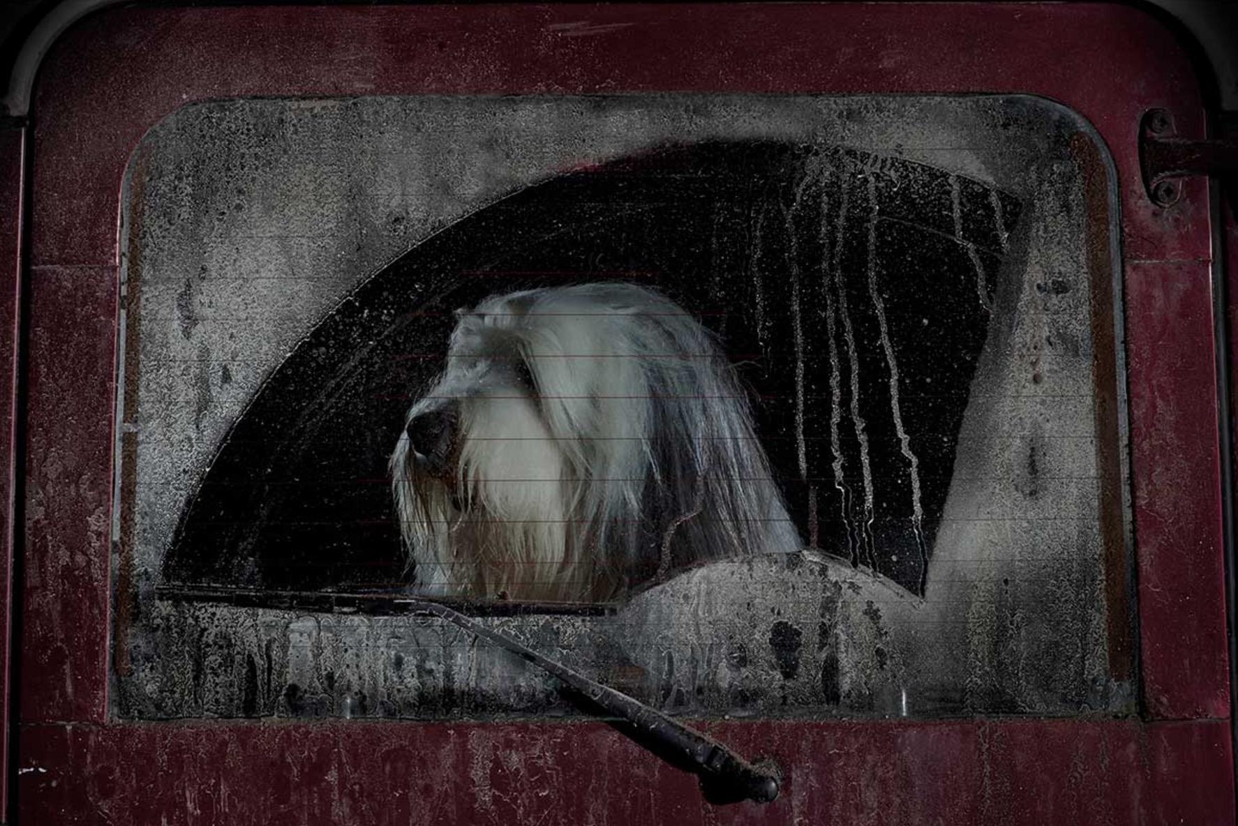 Martin-Usborne-photographe-chiens-voitures-8