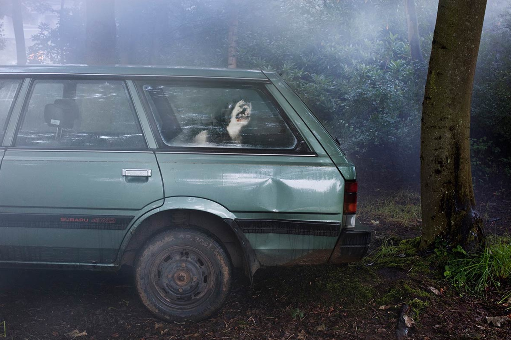 Martin-Usborne-photographe-chiens-voitures-9