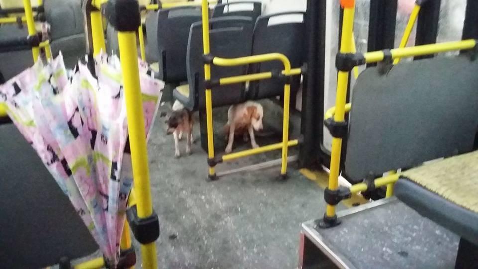 bus-argentine-chiens-1
