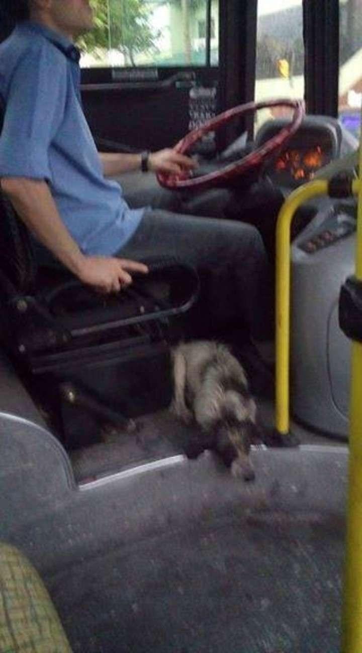 bus-argentine-chiens-2