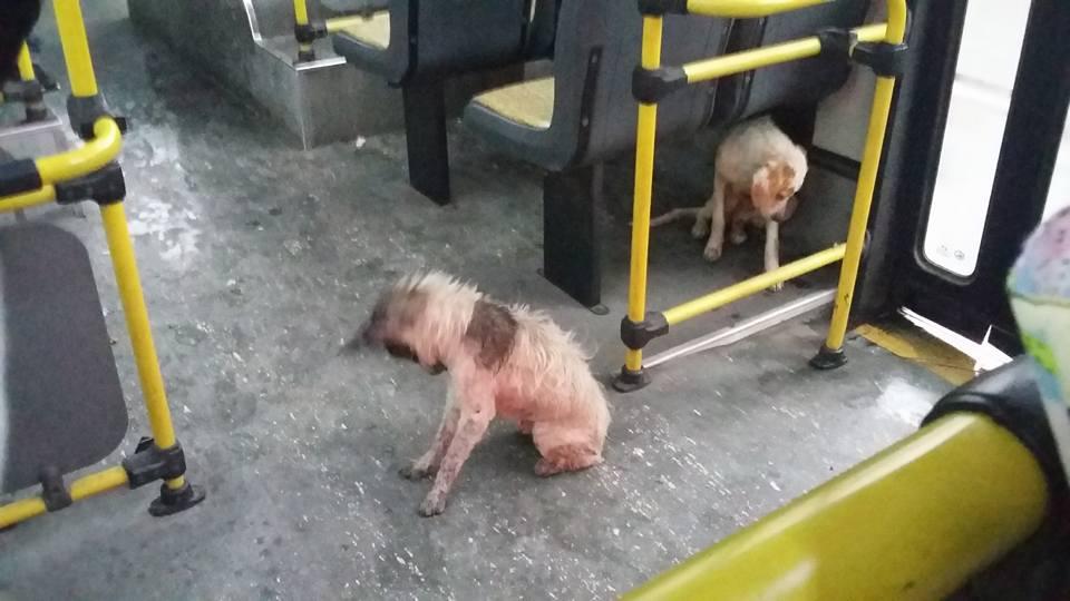 bus-argentine-chiens-3