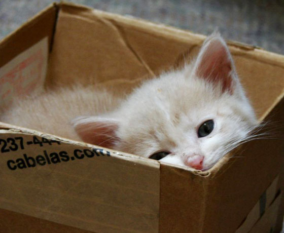 chatons-experience-manuel-inde-2