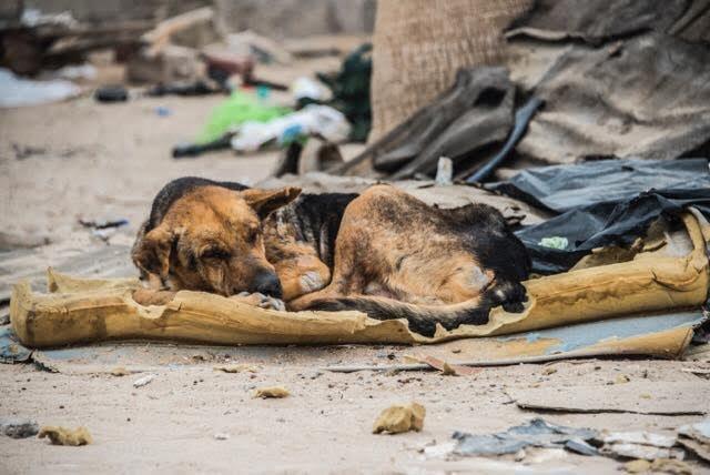 chien-ordures-rue-mexique-1