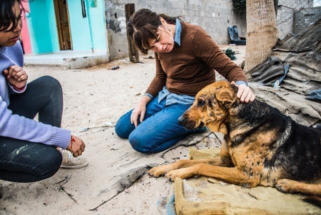 chien-ordures-rue-mexique-2