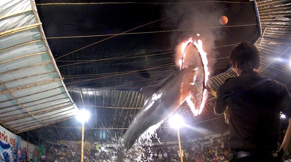 cirque-ambulant-dauphins-3