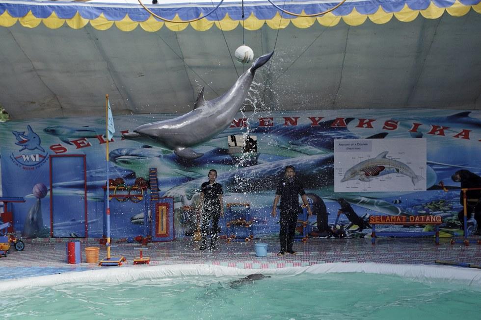 cirque-ambulant-dauphins-4