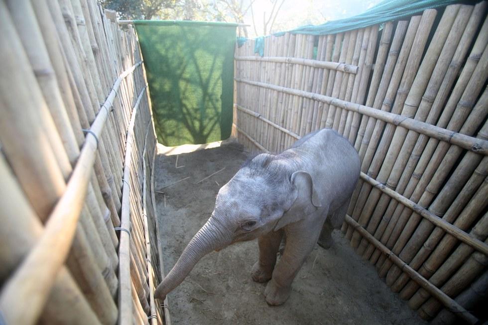 elephanteau-chute-fosse-2