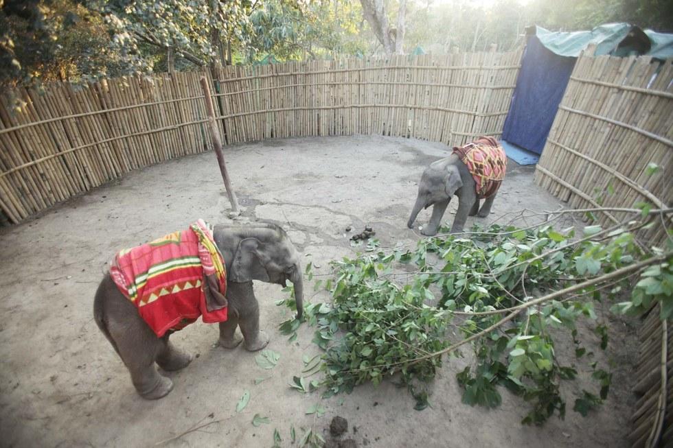 elephanteau-chute-fosse-3