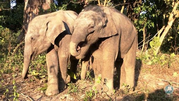 elephanteau-chute-fosse-4