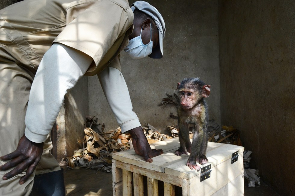 missa-babouin-RDC-orphelin-1
