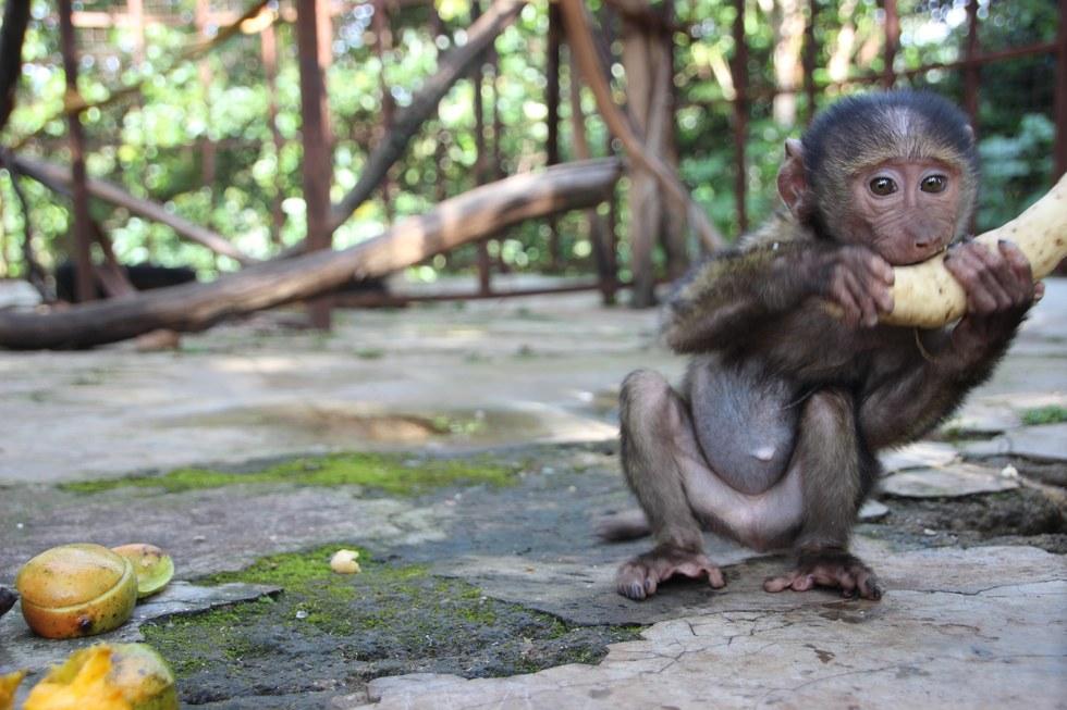 missa-babouin-RDC-orphelin-5