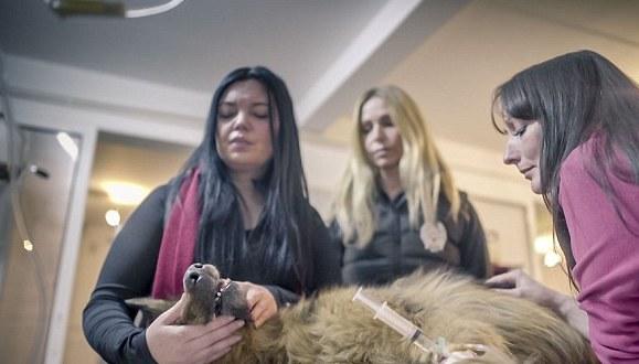 spirit-bucarest-chien-berger-allemand-maltraitance-6
