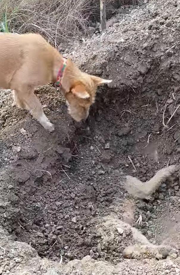 chien-enterre-ami-thailande-2