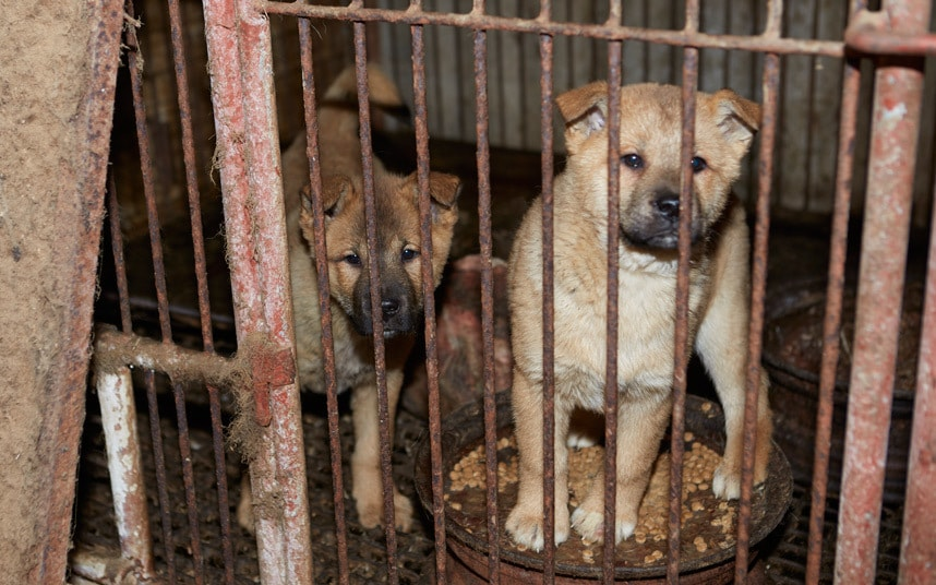 korea-dog-rescue-c_3241218k