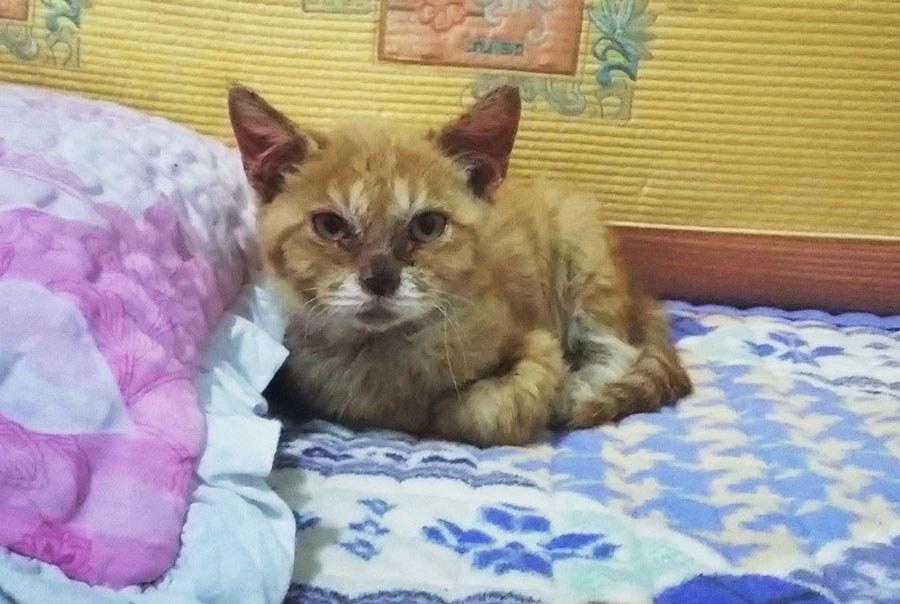 nimo-cat (1)