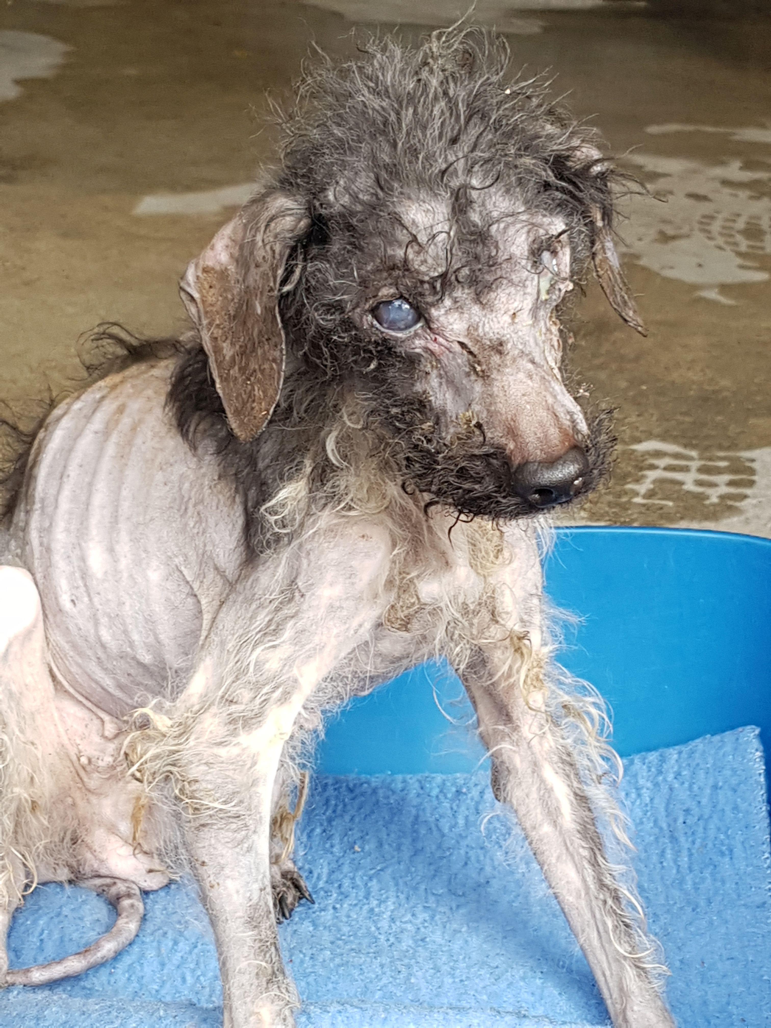 sauvetage-spa-rhone-53-chiens-2