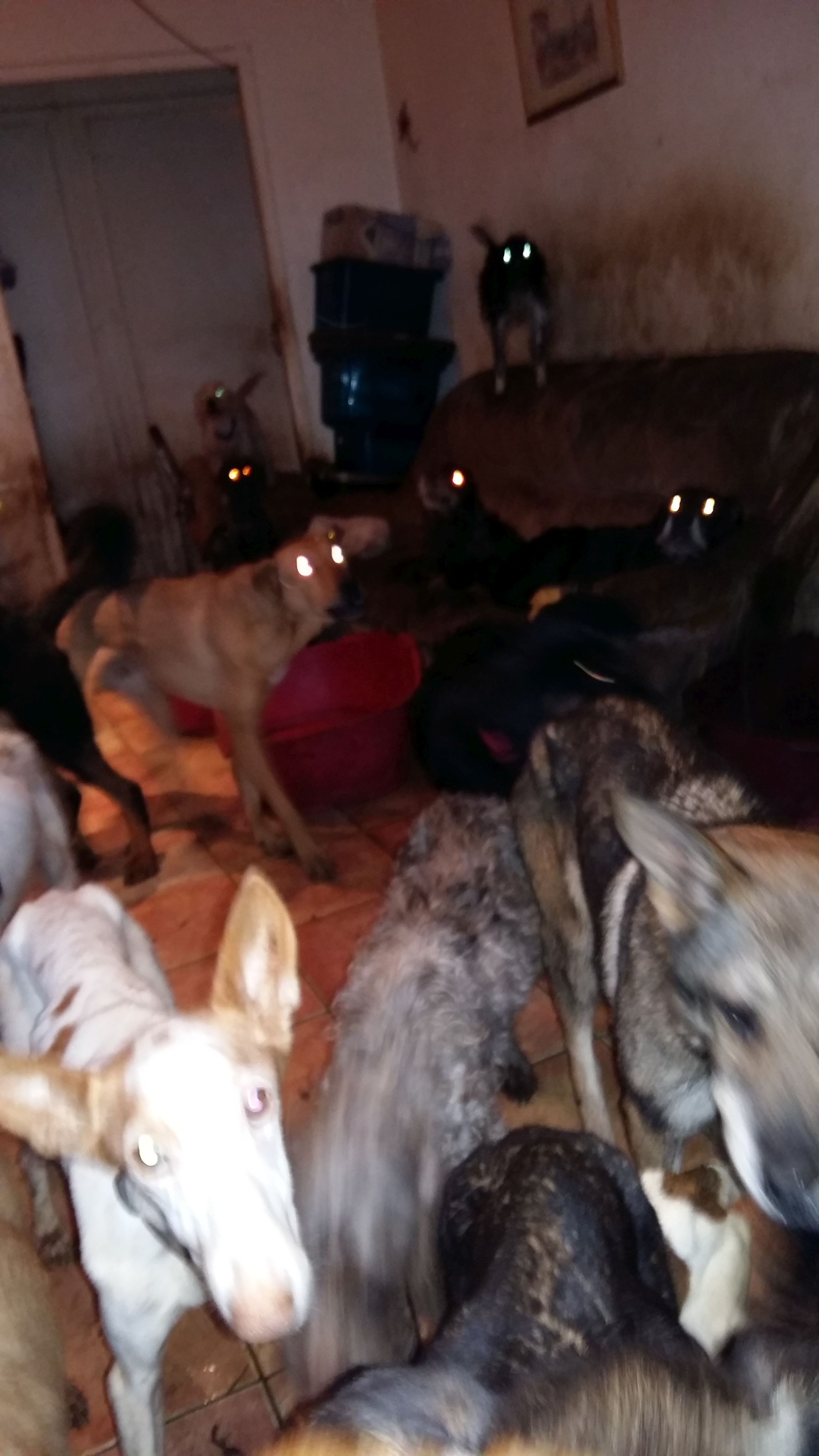 sauvetage-spa-rhone-53-chiens-4