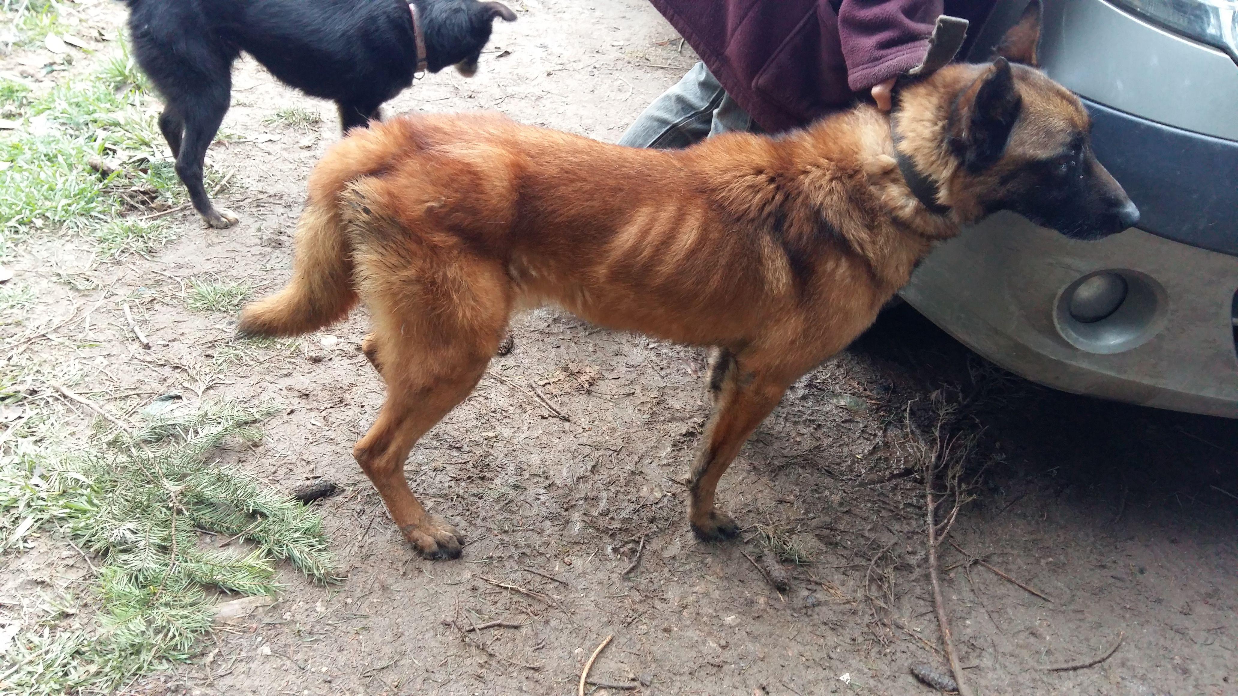 sauvetage-spa-rhone-53-chiens-7