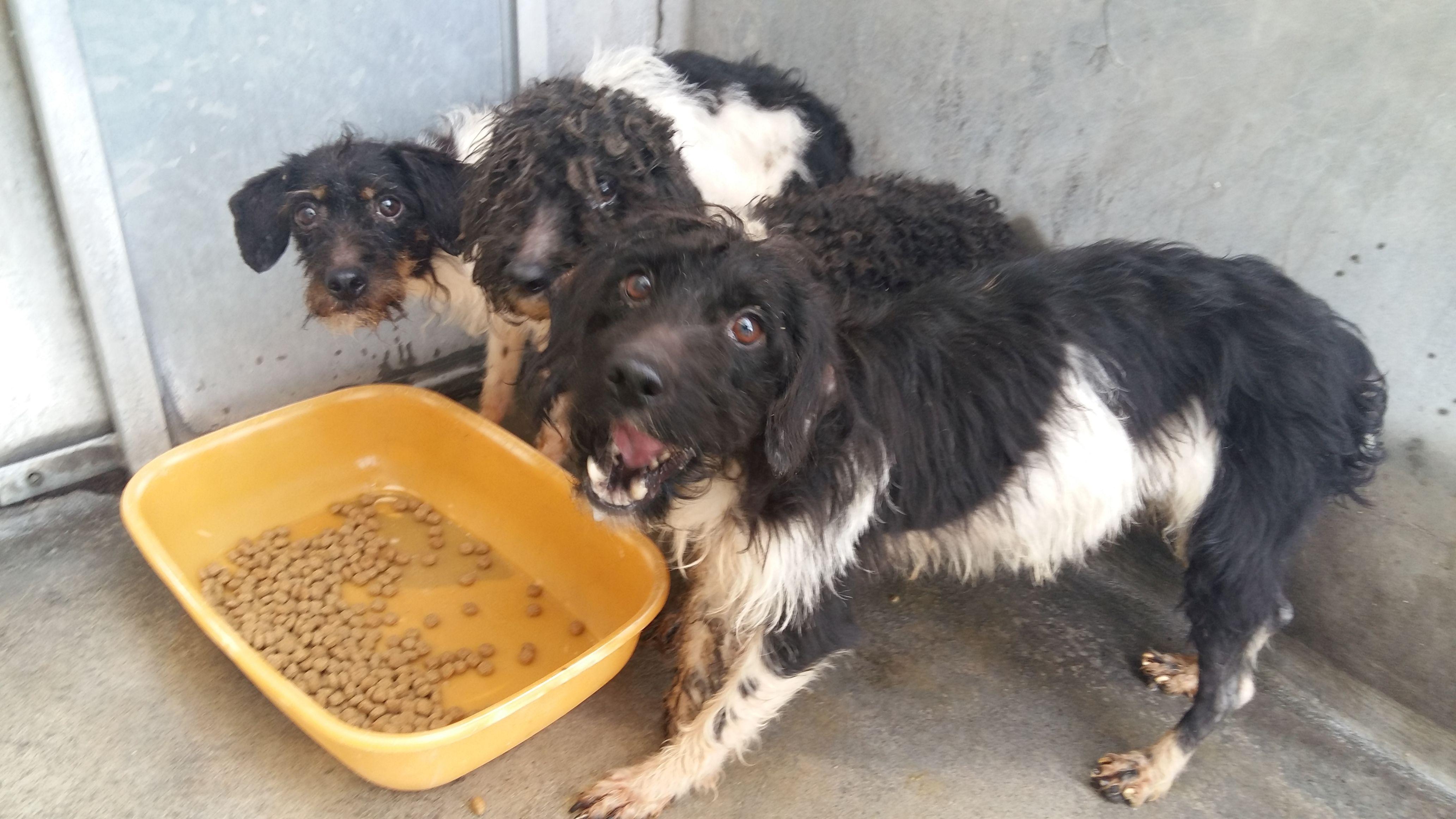 sauvetage-spa-rhone-53-chiens-8