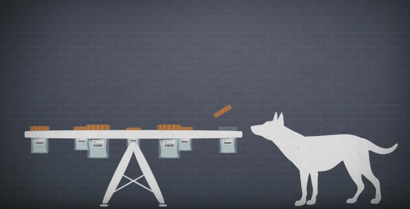 tests chiens