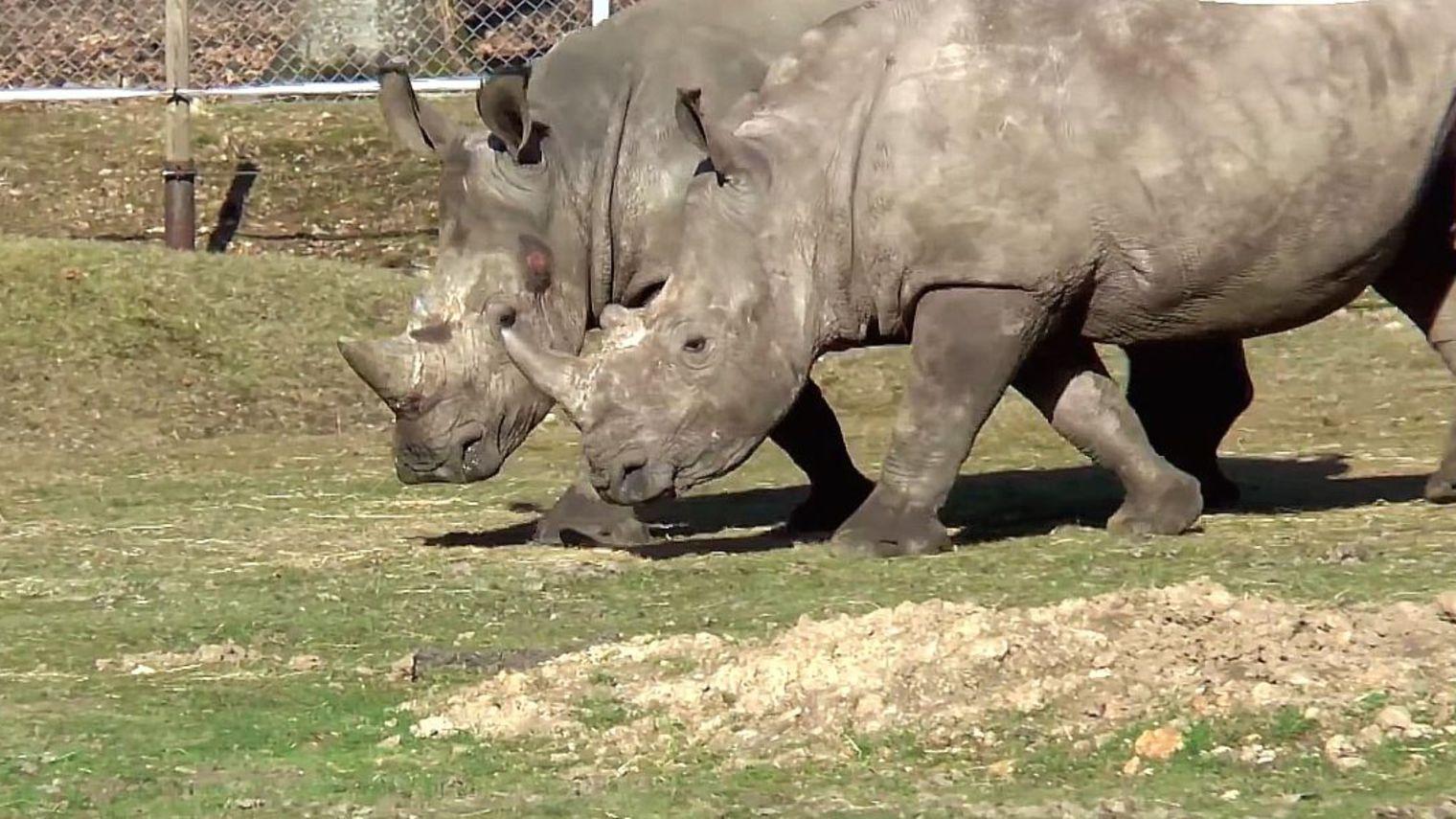 vince-rhinoceros-abattu-zoo-1