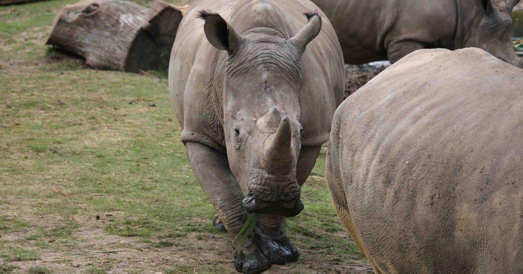 vince-rhinoceros-abattu-zoo-2