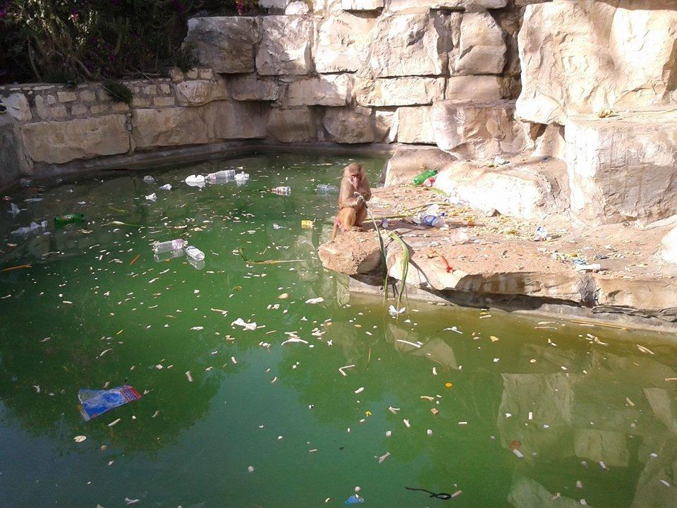 zoo-belvedere-tunis-crocodile-6