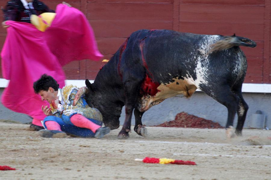 Daniel-Garcia-navarrete-corrida-madrid-8