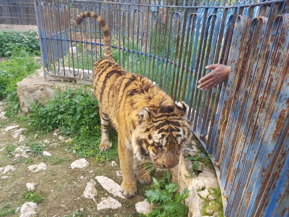 alaa-aleppo-zoo-2