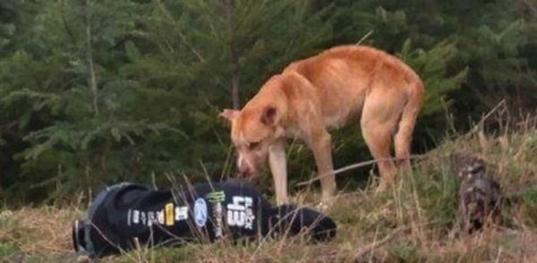 bear-chien-sauvetage-amanda-4