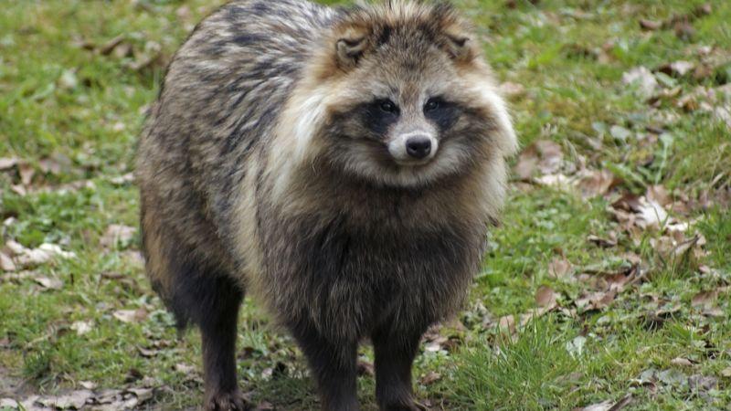 cat-fur-in-fake-fur-3
