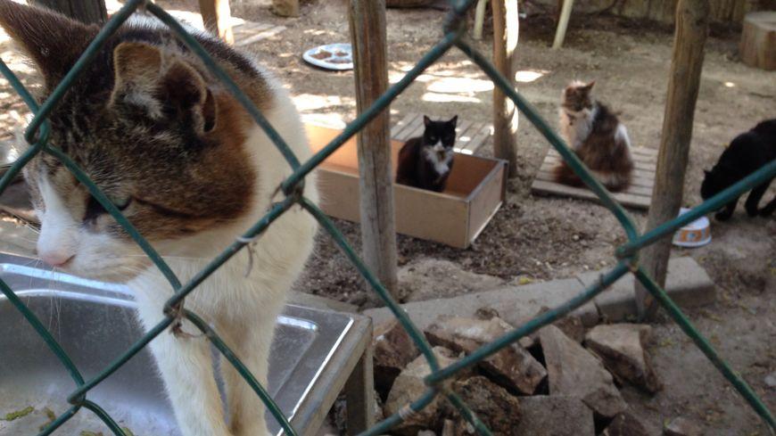 cat-serial-killer-
