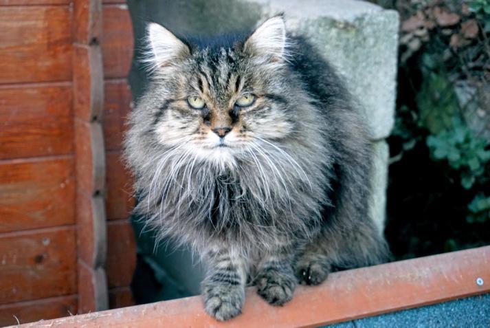 cat-serial-killer-3