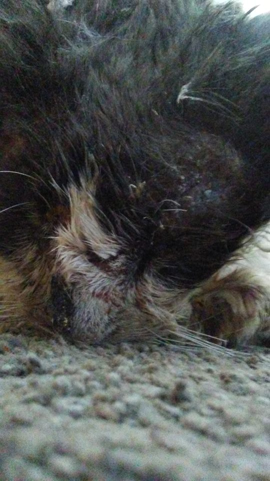 cat-tortured-hot-glue-3