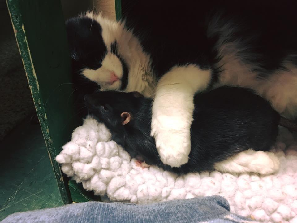 chat-rat-chien-inseparables-4