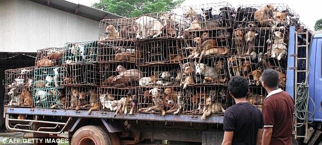 dog-meat-ban-taiwan-1