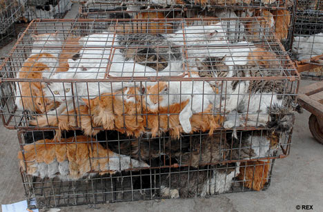 VICTORY  This Country Just Banned The Cruel Cat And Dog Meat