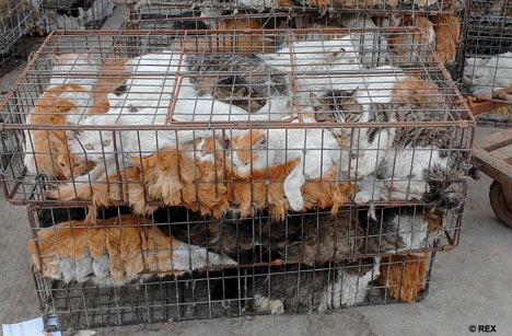 dog-meat-ban-taiwan-2