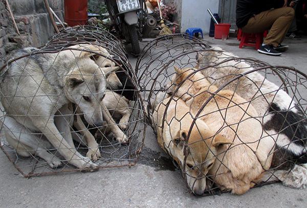 dog-meat-ban-taiwan-3