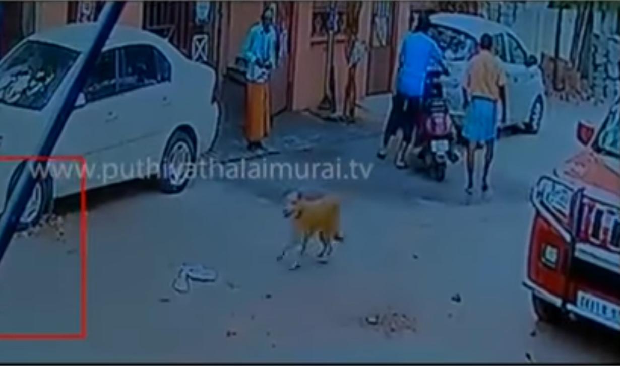 dogs-stray-stabbing-2