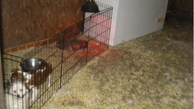 jailed-uk-breeder-04-3